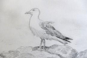 Le paradis des oiseaux : 1-Kildacrayonné