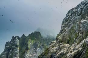 Le changement climatique menace les oiseaux à StKilda