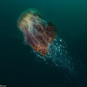 Les merveilles sous-marines de StKilda