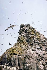 St Kilda birds ©Glenn Torquil MacLeod
