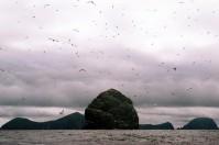 St Kilda birds 2 ©Glenn Torquil MacLeod