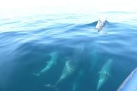 Les grands dauphins près du bateau ©Camille Peney