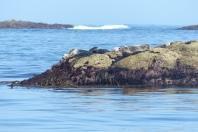 Les phoques vers l'île de Sein ©Camille Peney