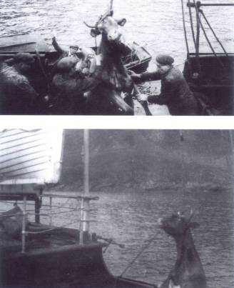Preparation for the evacuation of the St Kildans
